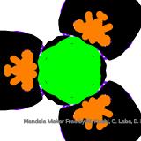 Mandala (269/4389)